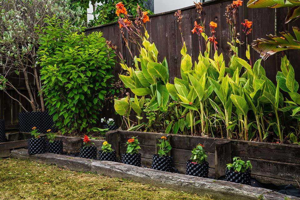 plant pots Auckland