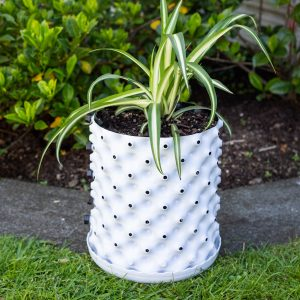 Plant pot NZ 6.5 Ltr