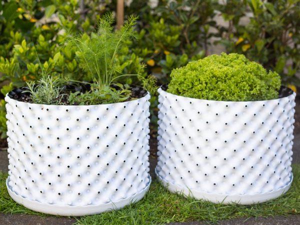 Plant pot for vegetables