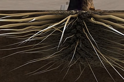 how to enhance plant roots