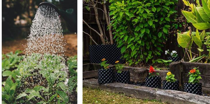 water plant pots