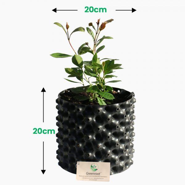 plant pot 5 Ltr