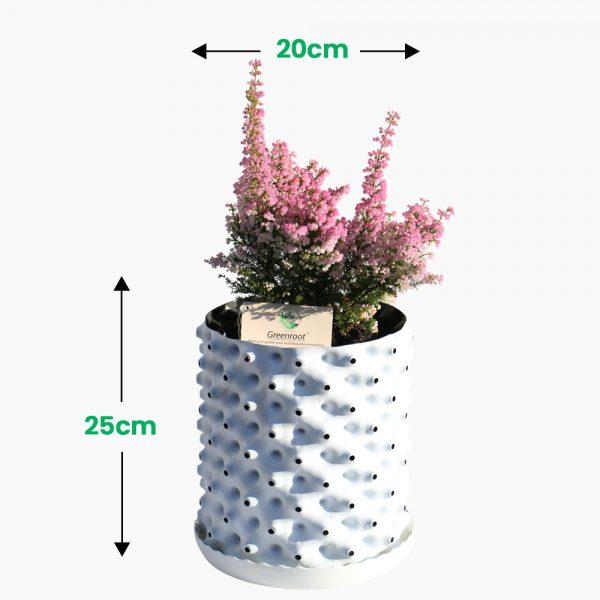 plant pot 6.5 Ltr